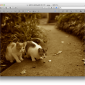 Macのプレビューで写真をセピア色に加工する方法