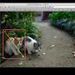 Macのプレビューで画像や写真に図形や矢印を書き込む方法