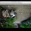 Macのプレビューで画像を回転・反転させる方法